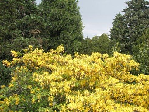 arboretum-zlte_r4411_res.jpg