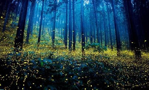 svetlusky---yu-hashimoto_r7516.jpg