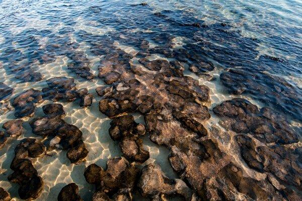 Skamenelé stromatolity ukazujú, ako vyzeral starobylý život na Zemi. Vznikli postupným vrstvením jednobunkovcov. Na obrázku sú moderné stromatolity na západe Austrálie.