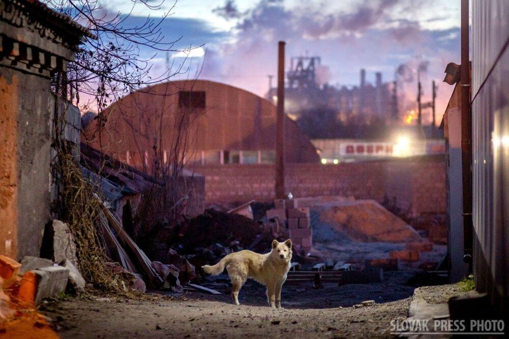 Víťazná fotografia kategórie Príroda a životné prostredie - Tomáš Benedikovič