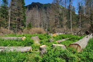 Spílené stromy v Kôprovej doline.