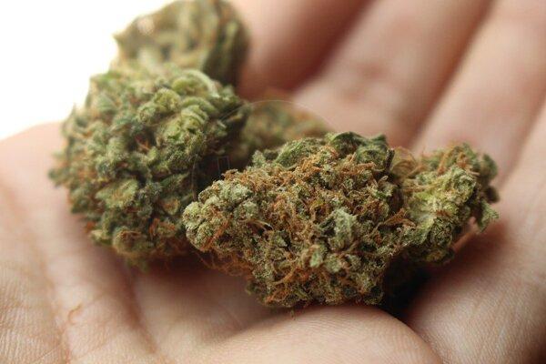 Herbou sa môže stať každá vysušená rastlina, napustená špeciálnou chemikáliou.