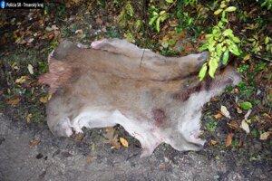 Zvlečená koža z jelenčaťa.