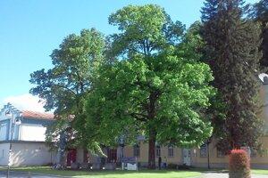 O titul strom roka sa uchádza jedenásť stromov.