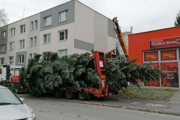 Stromček vyrúbali priamo v meste.