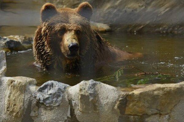 Aj túto šelmu môžete pozorovať vo večerných hodinách v zoo.