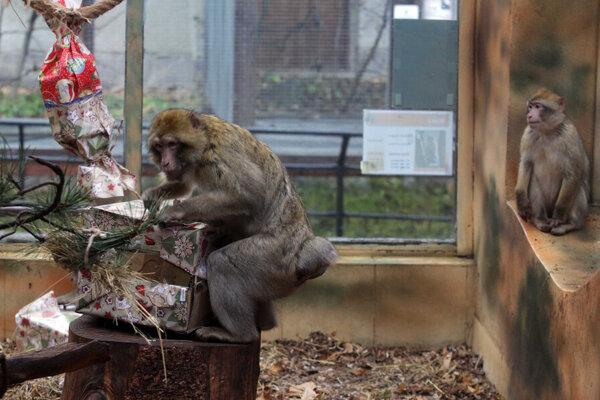 Zoologická záhrada sa odela do sviatočného šatu.