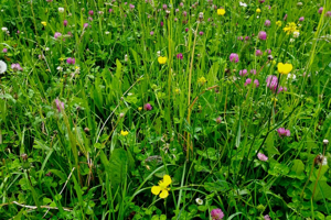 Zdravé rozkvitnuté prostredie je pre včely nevyhnutné.