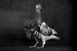 Holub - fotograf