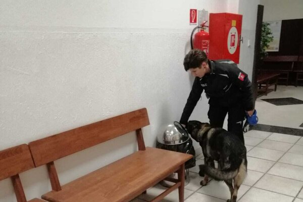 Vycvičený pes hľadá bombu na súde.