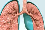 3D Ilustrácia dýchacieho systému.