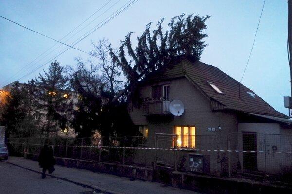 Strom sa oprel o dom.
