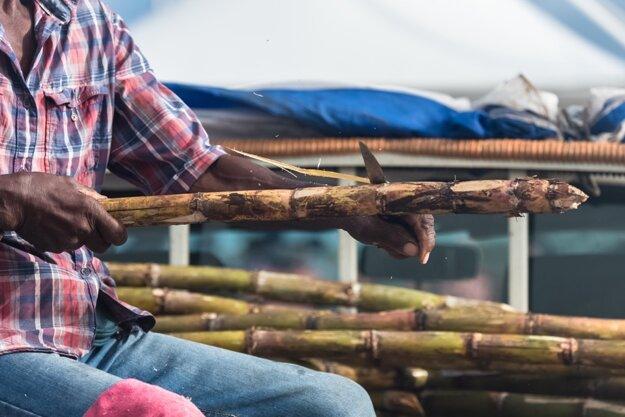Čistenie cukrovej trstiny na ostrove Guadeloupe