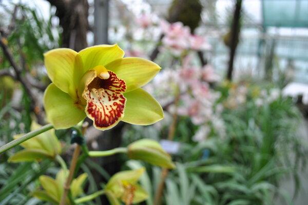 Niektoré druhy majú skutočne výnimočný vzhľad i vôňu, čo môžete zistiť aj na výstave.