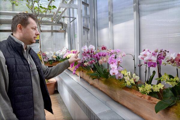 Výstava orchideí v Botanickej záhrade.