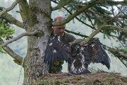 Miloš Majda pri kontrole hniezda orla skalného.