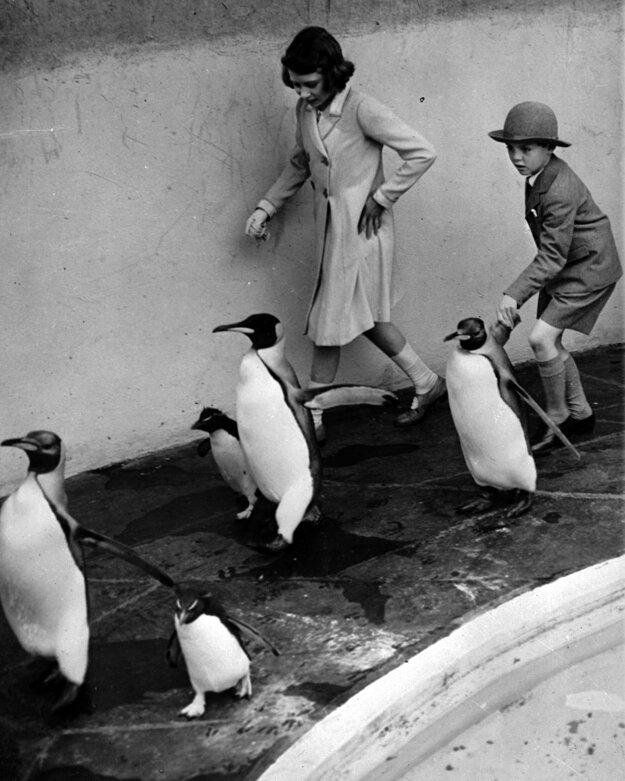 Na snímke z roku 1938 sa mladá Alžbeta prechádza so svojím kamarátom medzi tučniakmi v londýnskej ZOO.