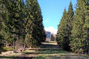Lesná cesta k Heliosu, lemujú ju stromy.