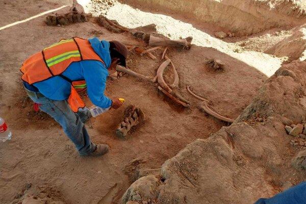 V Mexiku objavili kosti mamutov.