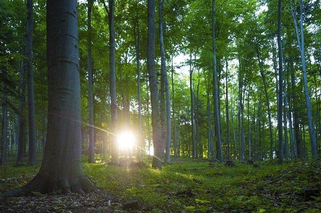 Poloniny - Bukový prales