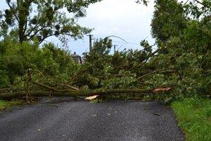 Spadnutý strom blokoval cestu.