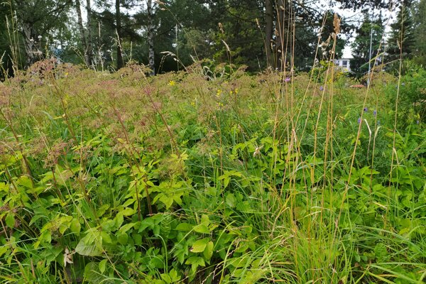 Za zarastenú poľnohospodársku pôdu môžu majitelia dostať pokutu. ilustračné foto.