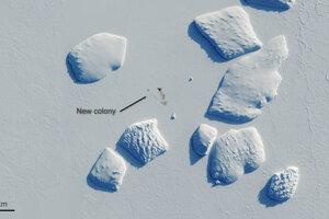 Nová kolónia pri Ninnis Bank na juhu Antarktídy.
