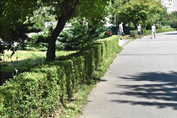 Obyvateľovi sa nepáči nízko zrezaný plot.