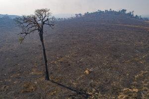 Pôda, ktorú nedávno vypálili a odlesnili chovatelia dobytka, neďaleko Novo Progresso, štát Para v Brazílii.