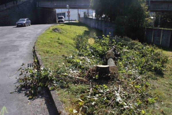 Stromy vyrúbali koncom septembra.
