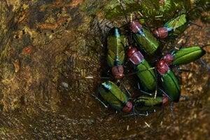 Skupinka švábov blízko hniezda, pri objave ktorého boli aj slovenskí vedci z SAV.