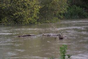 Rieka v Nitre.
