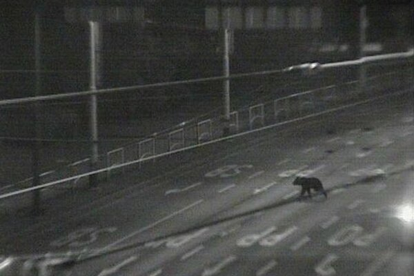 Kamery zachytili v roku 2012 medveďa v centre Prešova.