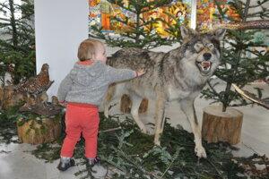 Takýchto trofejí by malo od budúceho roku ubúdať, ministerstvo životného prostredia chce lov vlka úplne zakázať.