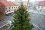 Tohtoročný viacnočný strom v Trnave.