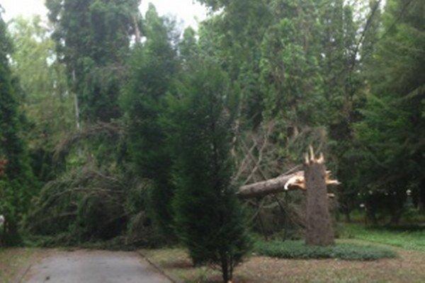 Zlomený strom spadol dnes okolo piatej.