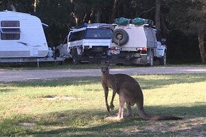 Kemp na Ellis beach mal rôznorodých návštevníkov.