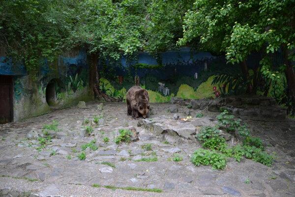Medveď Félix by sa už čoskoro mal dočkať nového výbehu.