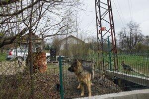 Pozemok pri dome Csányiho i jeho suseda strážia nemecké ovčiaky.