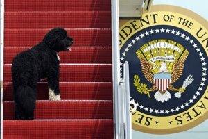 Na archívnej snímke zo 4. augusta 2010 pes Bo nastupuje do lietadla Air Force One.