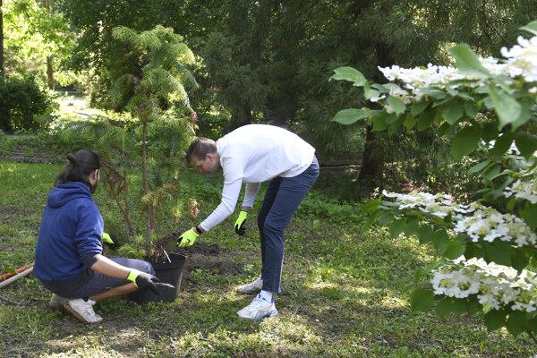 Botanická záhrada je bohatšia o nové stromy.