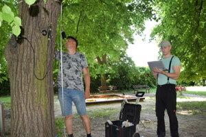 Pracovníci SAV skontrolujú v Leviciach 150 strom. Využívajú pri tom tomograf.