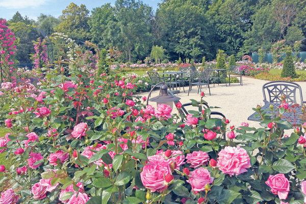 Ruže z Dolnej Krupej sa vyvážali nielen do celej Európy, ale aj do USA a Kanady.