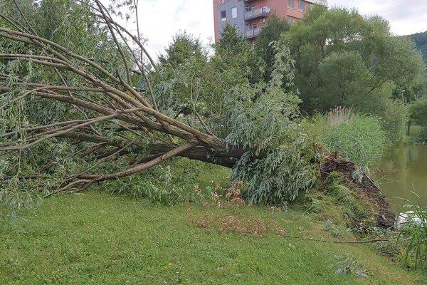 Silný vietor s dažďom vyvrátil stromy.