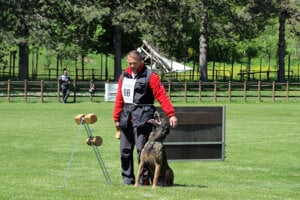 -Príprava na aport na majstrovstvách sveta belgických ovčiakov.