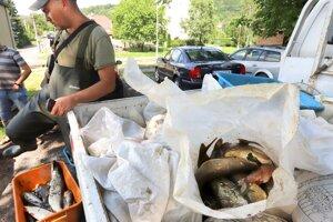 Rybári zbierajú uhynuté ryby.