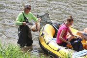 Zber rýb z Hrona krátko po ekologickej havárii.