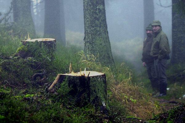 Nelegálny výrub dreva v Národnom parku Nízke Tatry.