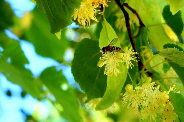 Včelárska nedeľa v skanzene Vychylovka