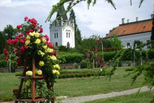 V Arboréte Mlyňany začali kvitnúť ruže.